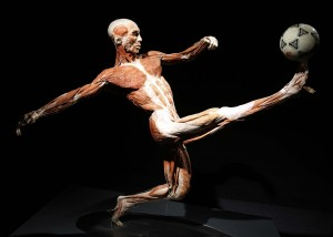 Body Worlds foot